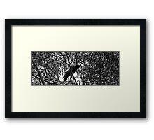 Crowing in b/w Framed Print