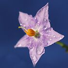 A Touch of Purple by KUJO-Photo