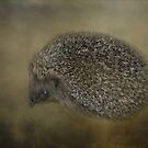 Hedgehog by Karen Martin