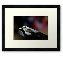 Brownie (5) Framed Print