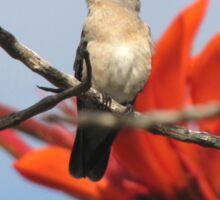 Buffy Hummingbird 1 Sticker