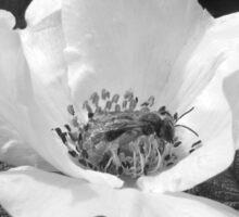 Black Jetbead Flower (bw) Sticker