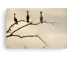 The Snappy Conversation of Cormorants Metal Print