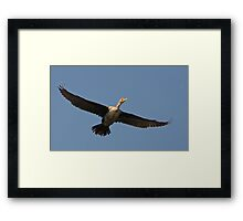 Flying Cormorant Framed Print