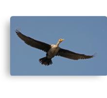 Flying Cormorant Canvas Print