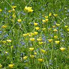 Do not forget your buttercup meadow by Graham Geldard