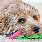 Dogs and Their Toys by susan stone