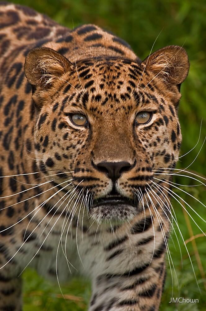 Amur Leopard by JMChown
