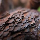 Layers of rust by woodlandninja