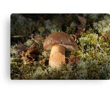 Cepe - Edible Mushroom Canvas Print