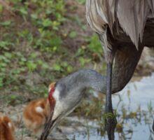 Crane Nursery- Waterfowl Yard Sticker