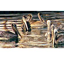 Pelicans of love Photographic Print