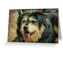 """Goodess"" the Shaggy Dog Greeting Card"