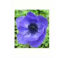 Dreamy Blue Anemone Art Print
