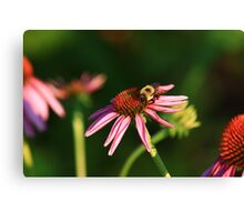Bumble me Daisy Canvas Print