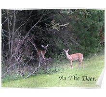 As The Deer... Poster