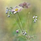 Summer's Last Song - Japanese anemone by jules572