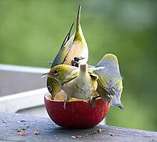 How many birds can you get on an apple.........? by Roy  Massicks