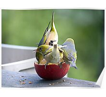 How many birds can you get on an apple.........? Poster