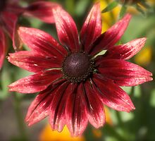 Another lonely Flower by Heather Eeles