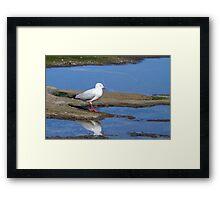 Silver Gulls Framed Print