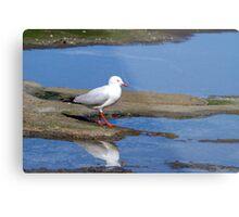 Silver Gulls Metal Print