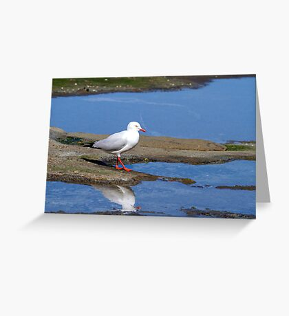 Silver Gulls Greeting Card