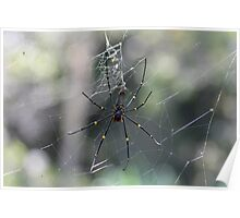 Golden Orb Spider and Web Poster