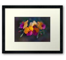Delicate Blossoms Framed Print