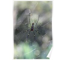 Golden Orb Spider and Web 2 Poster