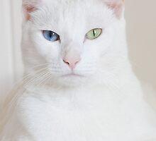 Heterochromia Iridum by bindabee