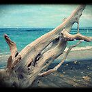 driftwood II by geophotographic