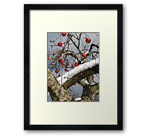 Bird Beaten Leftovers Hang on the Old Apple Tree Framed Print