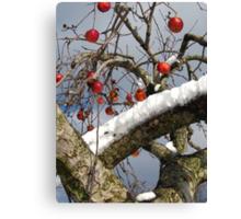Bird Beaten Leftovers Hang on the Old Apple Tree Canvas Print
