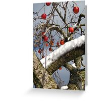 Bird Beaten Leftovers Hang on the Old Apple Tree Greeting Card