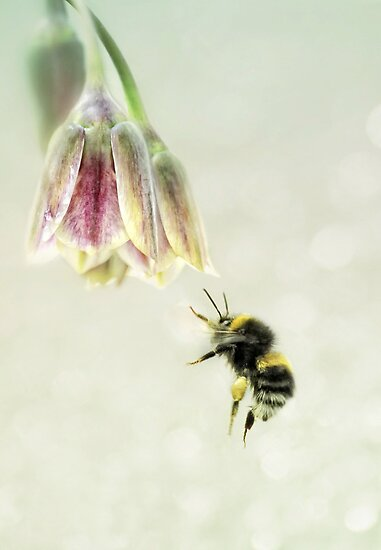 The pollen collector by Lyn Evans