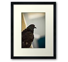 Bird's Eye 2 (the thinker) Framed Print