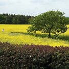 A sea of yellow by John Dalkin