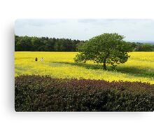 A sea of yellow Canvas Print
