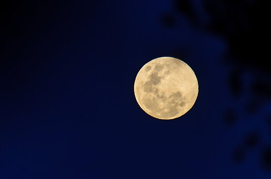 A wink to Neil Armstrong on a blue moon by wolfcat