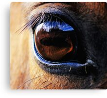 Horse Eye View Canvas Print