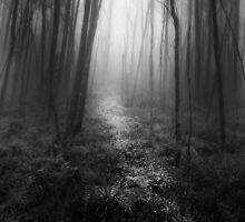 Misty Woods by Jessy Willemse