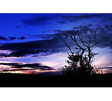Tree at sunset 2  Photographic Print