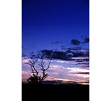 Tree at sunset 3  Photographic Print
