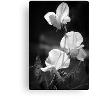 Sweet Pea Flowers in Monochrome Canvas Print