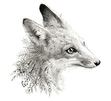 A Young Fox by Leslie Evans