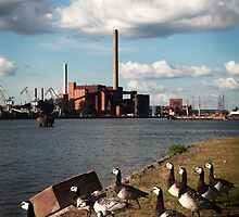 The harmonious co-existence of seagulls and power plant by Leo Shum