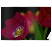 Tulips Together Poster