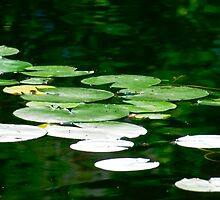 Lily Pads in the Pond by Don Schwartz