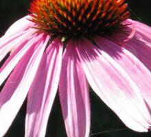 Echinacea flower Sticker